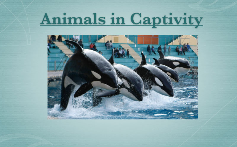 ANIMALS IN CAPTIVITY