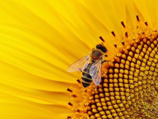 Εκπαιδευτήρια ΠΑΛΛΑΔΙΟ - Η Κοινωνία των Μελισσών